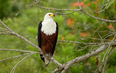 Bird Kruger PArk