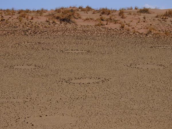 Sossusvlei Fairy Circles Namibia